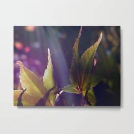 jap maple Metal Print