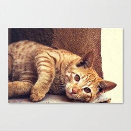 Cat roux Canvas Print