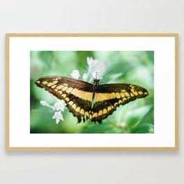 Emperor Swallowtail Framed Art Print
