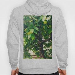 Apple Tree Photography Hoody