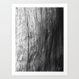Driftwood 2 Art Print