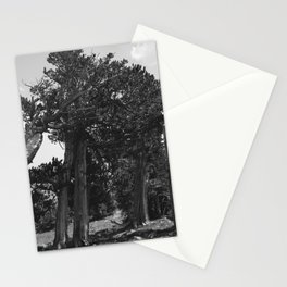 leaning trees Stationery Cards