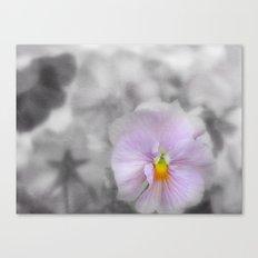 Lilac soft Focus Pansy Canvas Print