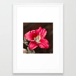 Summer Sprung 2 Framed Art Print