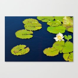 Dark Blue Pond by Teresa Thompson Canvas Print