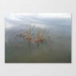 Escaped Cranberries Canvas Print