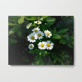 Little Flowers Metal Print