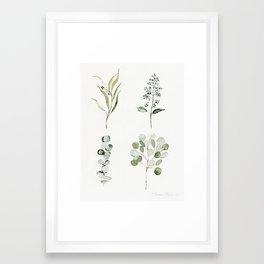 Eucalyptus Branches Framed Art Print