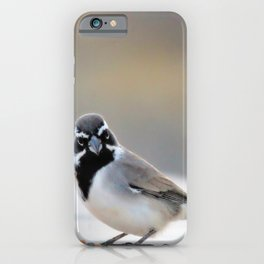 Black Chinned Sparrow-Barbara Chichester iPhone Case