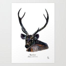Sambar deer Art Print