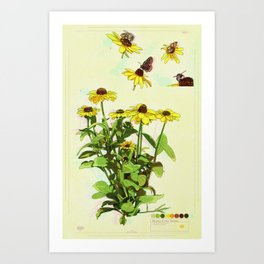 Black Eyed Susan and Her Pollinators Collection TRIPPY Art Print