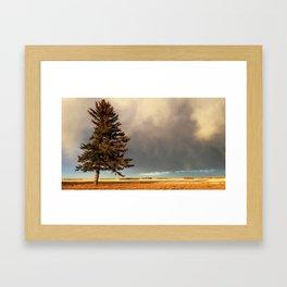 Alone at Dusk Framed Art Print