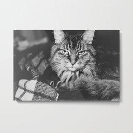 Cattitude Metal Print