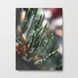 Freshly Watered Metal Print