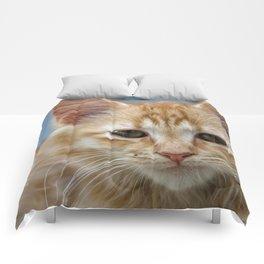 Ginger Kitten Comforters