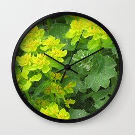 Euphorbia & Lady's Mantle Wall Clock