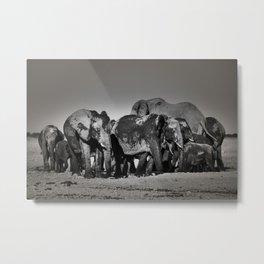 Elephant Herd Circling Metal Print