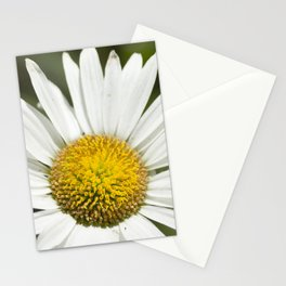 White daisy flowers Stationery Cards