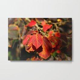 Colorful Autumn Leafes Metal Print