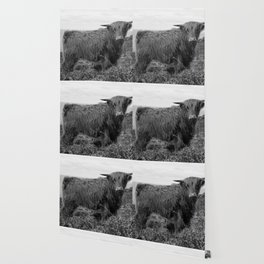 Highland cow II Wallpaper