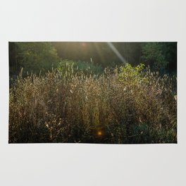 Morning Field Light Rug