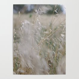 Tall wild grass growing in a meadow Poster