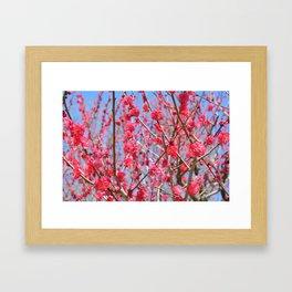 Japanese Spring #1 Framed Art Print