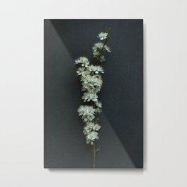 Blackthorn Blossom Metal Print