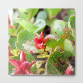 Watercolor Flower, Dwarf Willow 02, Northern Iceland Metal Print