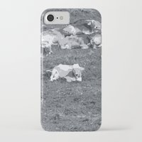 cows iPhone & iPod Cases featuring Cows by Mr and Mrs Quirynen