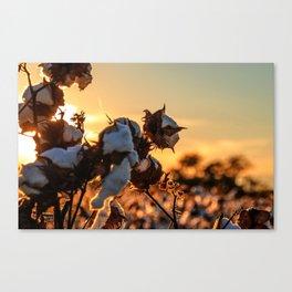 Cotton Field 12 Canvas Print