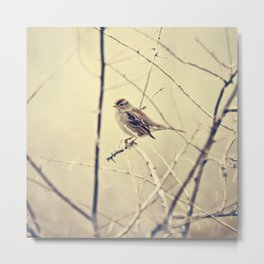 Sweet little bird sitting on a branch Metal Print