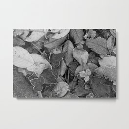 Frosty Forest Floor Donegal bw Metal Print
