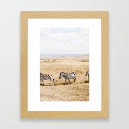 Zebra Trio Framed Art Print