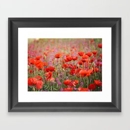 Poppies in Spring Framed Art Print