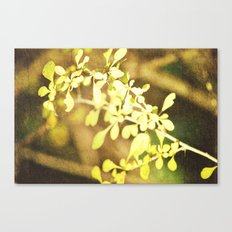 Thorns Canvas Print