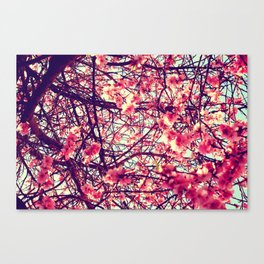 Blossom tree Canvas Print