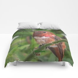 Hummingbird in the Japanese Maple Comforters