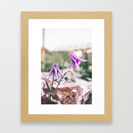 Fairy Flowers Framed Art Print