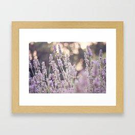 Smells like lavender Framed Art Print