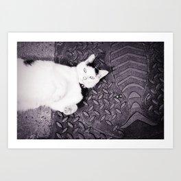 Animal :: Catfish Art Print