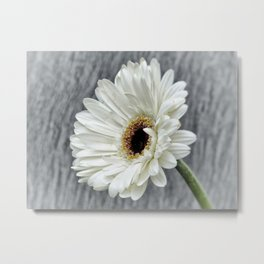 Fresh As A Daisy Metal Print