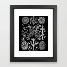 Lichens(Lichenes) by Ernst Haeckel Framed Art Print