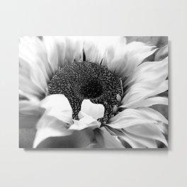 Black & White Sunflower Modern Cottage Chic Modern Farmhouse Art A486 Metal Print