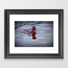 Red Headed Duck Framed Art Print