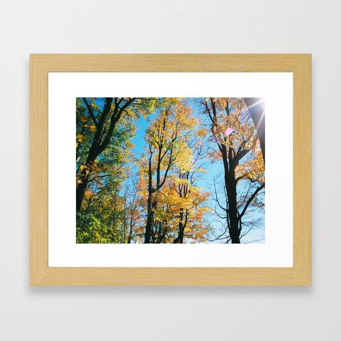 Early Autumn Sunflare Framed Art Print