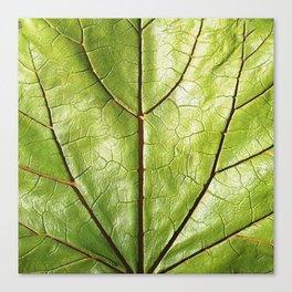 GREEN ORGANIC LEAF WITH VEINS DESIGN ART Canvas Print