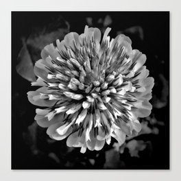 Red Clover in Black and White II Canvas Print