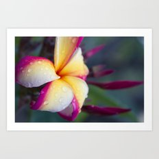 Hawaii Plumeria Flower Jewels Art Print
