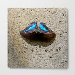 Blue Morpho Butterfly by Teresa Thompson Metal Print
